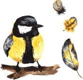 Ένα σύνολο hand-drawn watercolor που περιέχει το πουλί Parus και το φτερό Στοκ εικόνα με δικαίωμα ελεύθερης χρήσης