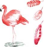 Ένα σύνολο hand-drawn watercolor που περιέχει το πουλί Phoenicopterus Στοκ Φωτογραφίες