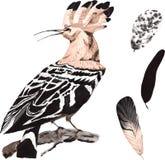 Ένα σύνολο hand-drawn watercolor που περιέχει το πουλί Upupa epops και φ Στοκ Εικόνα