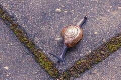 Ένα σύρσιμο σαλιγκαριών Στοκ εικόνα με δικαίωμα ελεύθερης χρήσης