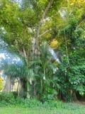 Ένα τέτοιο μεγαλοπρεπές δέντρο Η φύση είναι αληθινά όμορφη στοκ εικόνες