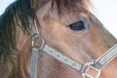 Ένα τεμάχιο ενός horse& x27 κεφάλι του s Στοκ Εικόνες