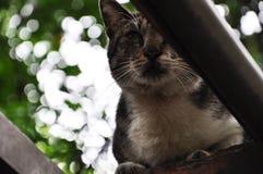 Ένα, τοίχος, εύθυμος, γάτα, χαριτωμένη στοκ εικόνες