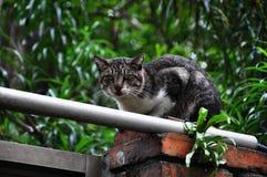 Ένα, τοίχος, εύθυμος, γάτα, χαριτωμένη στοκ φωτογραφία με δικαίωμα ελεύθερης χρήσης