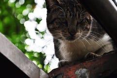 Ένα, τοίχος, εύθυμος, γάτα, χαριτωμένη στοκ φωτογραφίες με δικαίωμα ελεύθερης χρήσης