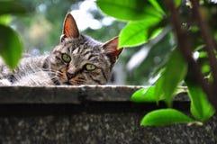 Ένα, τοίχος, εύθυμος, γάτα, χαριτωμένη στοκ φωτογραφία