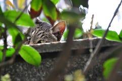 Ένα, τοίχος, εύθυμος, γάτα, χαριτωμένη στοκ φωτογραφίες