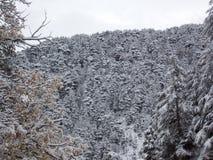 Ένα τοπίο γοητείας των κέδρων στα υψηλά λιβανέζικα βουνά το χειμώνα στοκ εικόνες με δικαίωμα ελεύθερης χρήσης