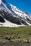 Ένα τοπίο στο πέρασμα Zojila στο ύψος 3529 μετρά, leh-Σπίναγκαρ εθνική οδός, Ladakh, Ινδία Στοκ Φωτογραφία