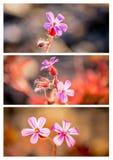 Ένα τρίπτυχο των άγριων λουλουδιών με άσπρα σύνορα στοκ φωτογραφία με δικαίωμα ελεύθερης χρήσης