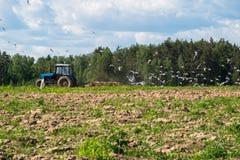 Ένα τρακτέρ οργώνει τον τομέα μια φωτεινή ηλιόλουστη ημέρα Αγροτικό τοπίο άνοιξη Στοκ Εικόνες