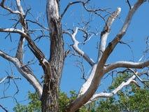 Ένα τρομακτικό παλαιό δέντρο στη νύχτα αποκριών Στοκ εικόνες με δικαίωμα ελεύθερης χρήσης