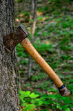 Ένα τσεκούρι που κολλιέται σε ένα δέντρο Στοκ Εικόνα