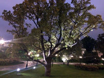 Ένα υπέροχα αναμμένο δέντρο το καλοκαίρι πάρκων στο σκοτεινό χρόνο Στοκ φωτογραφία με δικαίωμα ελεύθερης χρήσης
