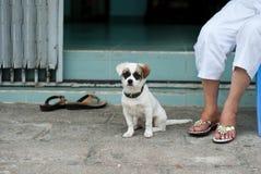 Ένα λυπημένο σκυλί κάθεται στην οδό Άσπρο κουτάβι Στοκ εικόνες με δικαίωμα ελεύθερης χρήσης
