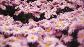 Ένα υπόβαθρο με τα λουλούδια, τις πεταλούδες και τις μέλισσες για τη ευχετήρια κάρτα απόθεμα βίντεο