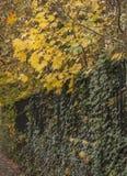 Ένα φθινοπωρινό πάρκο - οι Μπους και ο φράκτης Στοκ εικόνες με δικαίωμα ελεύθερης χρήσης