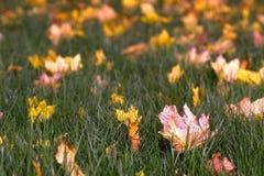 Ένα φθινόπωρο φεύγει στοκ εικόνα με δικαίωμα ελεύθερης χρήσης