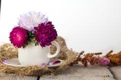 Ένα φλυτζάνι του αστέρα λουλουδιών για το εσωτερικό δωμάτιο διακοσμήσεων Ρόδινο όμορφο λουλούδι στο άσπρο επιτραπέζιο υπόβαθρο Στοκ Φωτογραφία