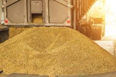 Ένα φορτηγό ξεφορτώνει το σιτάρι σε μια αποθήκευση σιταριού και ένα εργοστάσιο επεξεργασίας, μια δυνατότητα αποθήκευσης σιταριού, στοκ φωτογραφία