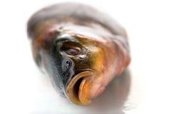 Ένα φρέσκο ακατέργαστο ψάρι σε ένα άσπρο υπόβαθρο Στοκ εικόνες με δικαίωμα ελεύθερης χρήσης