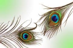 Ένα φτερό peacock Στοκ Φωτογραφίες