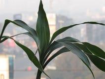 Ένα φυτό στοκ εικόνες