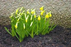 Ένα φυτό στοκ φωτογραφία