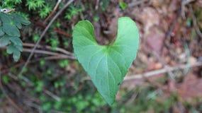 Ένα φύλλο που μοιάζει με μια καρδιά στοκ εικόνες με δικαίωμα ελεύθερης χρήσης