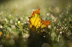 Ένα φύλλο σφενδάμου φθινοπώρου στη χλόη με το θολωμένο υπόβαθρο 2 στοκ εικόνες