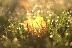 Ένα φύλλο σφενδάμου φθινοπώρου στη χλόη με το θολωμένο υπόβαθρο στοκ φωτογραφίες με δικαίωμα ελεύθερης χρήσης