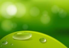 Ένα φύλλο με τα waterdrops Στοκ Εικόνα