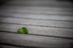 Ένα φύλλο σημύδων που κολλιέται Στοκ Εικόνες