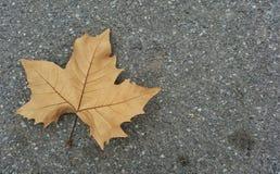 Ένα φύλλο στην οδό Στοκ εικόνα με δικαίωμα ελεύθερης χρήσης
