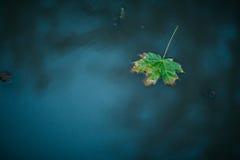 Ένα φύλλο σφενδάμου φθινοπώρου που επιπλέει στο νερό Στοκ φωτογραφία με δικαίωμα ελεύθερης χρήσης
