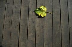 Ένα φύλλο Στοκ Εικόνες