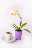 Ένα φλιτζάνι του καφέ και μια μικρή άσπρη ορχιδέα Στοκ φωτογραφία με δικαίωμα ελεύθερης χρήσης