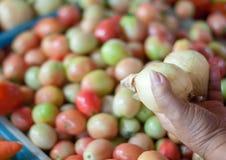Ένα χέρι ηλικιωμένων κυριών που δύο κρεμμύδια στοκ εικόνα