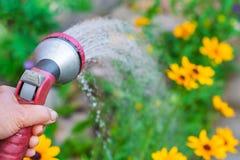 Ένα χέρι με το πυροβόλο όπλο ψεκασμού, πότισμα κίτρινα λουλούδια στοκ εικόνες
