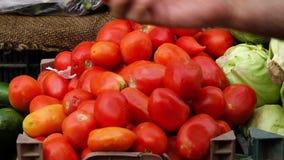 Σωρός των κόκκινων ντοματών απόθεμα βίντεο