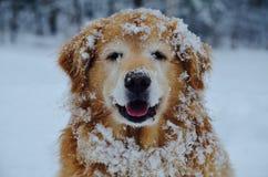 Ένα χαμόγελο σε ένα αστείο σκυλί είναι αγάπη το χειμώνα Στοκ Εικόνα