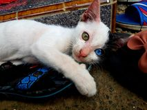 Ένα χαριτωμένο γατάκι με τα μοναδικά μάτια του στοκ εικόνες με δικαίωμα ελεύθερης χρήσης