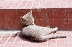 Ένα χαριτωμένο γατάκι που γλείφει τη γούνα του στα βήματα ενός μοναστηριού Στοκ φωτογραφία με δικαίωμα ελεύθερης χρήσης