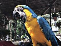 Ένα χαριτωμένο και ζωηρόχρωμο Macaw Στοκ φωτογραφία με δικαίωμα ελεύθερης χρήσης
