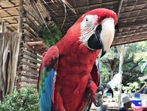 Ένα χαριτωμένο και ζωηρόχρωμο Macaw Στοκ εικόνες με δικαίωμα ελεύθερης χρήσης