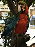 Ένα χαριτωμένο και ζωηρόχρωμο Macaw Στοκ φωτογραφίες με δικαίωμα ελεύθερης χρήσης