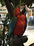 Ένα χαριτωμένο και ζωηρόχρωμο Macaw Στοκ Φωτογραφία