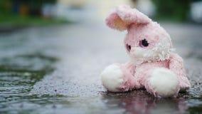 Ένα χαριτωμένο κουνέλι παιχνιδιών κάθεται σε μια λακκούβα στη βροχή απόθεμα βίντεο