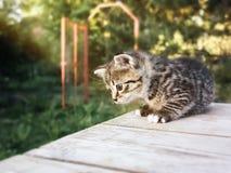 Ένα χαριτωμένο μικρό γατάκι εγκαθιστά σε έναν ξύλινο πίνακα, υπαίθρια στοκ εικόνες