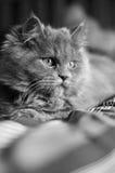 Ένα χαριτωμένο μικρό γατάκι που βρίσκεται σε ένα κρεβάτι Στοκ Φωτογραφίες